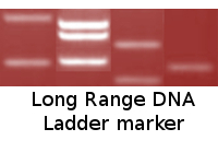 Long Range DNA Ladder marker