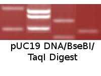 pUC19 DNA/BseBI/TaqI Digest