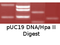 pUC19 DNA/Hpa II Digest