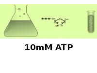 10mM ATP