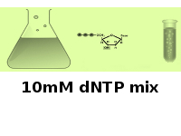 10mM dNTP mix