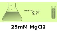 25mM MgCl2