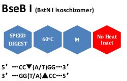 BseB I (BstN I isoschizomer)