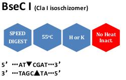 BseC I (Cla I isoschizomer)