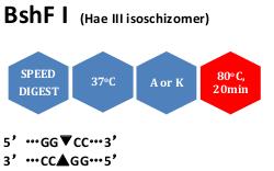 BshF I (Hae III isoschizomer)