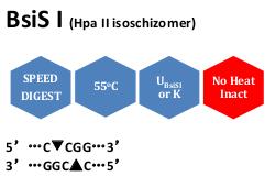 BsiS I (Hpa II isoschizomer)