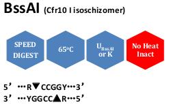 BssAI (Cfr10 I isoschizomer)