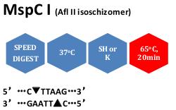 MspC I (Afl II isoschizomer)