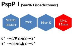 PspP I (Sau96 I isoschizomer)