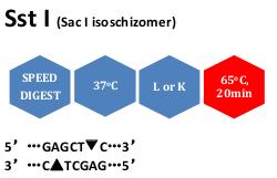 SstI (SacI isoschizomer)